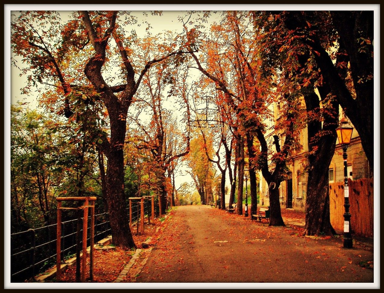 Other: Zagreb Autumn Path Street Croatia Golden Leaves Trees Dual ...