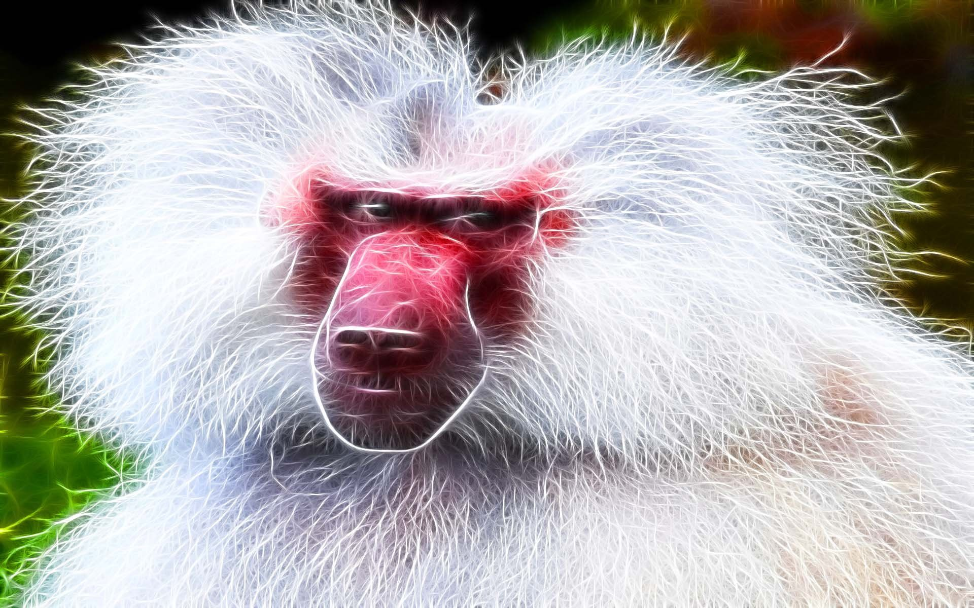 Baboon HD Wallpapers | WallpapersIn4k.net