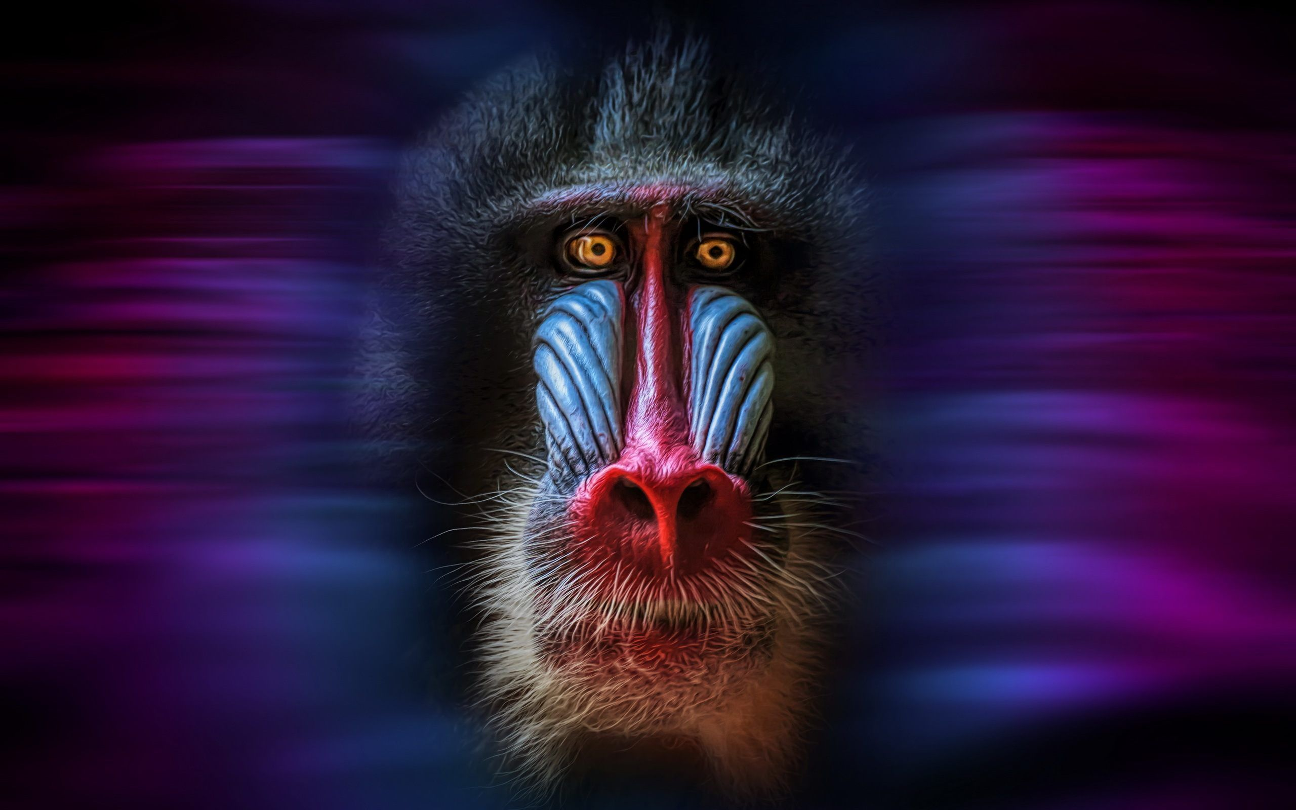 Download Mandrill Monkey Face Wallpaper for desktop, mobile phones ...