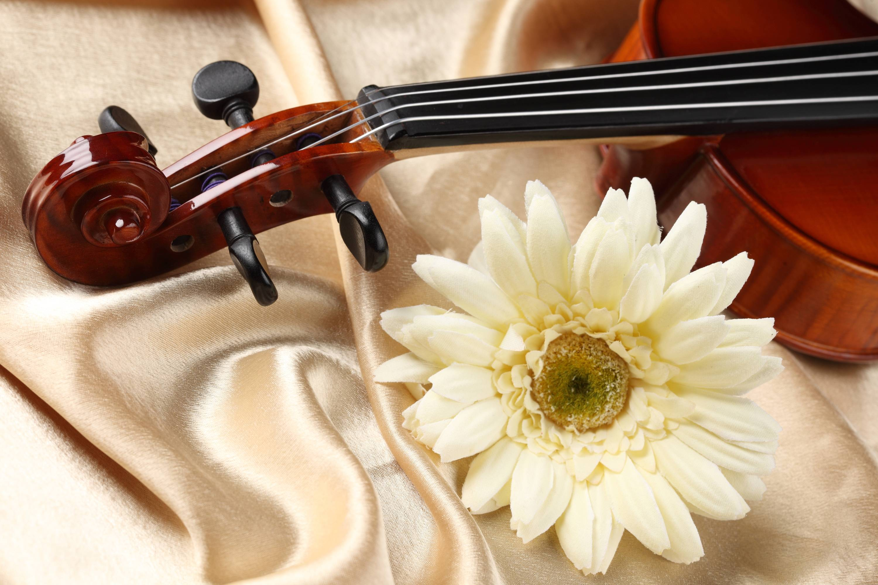 Violin Computer Wallpapers, Desktop Backgrounds 3000x2000 Id: 102390