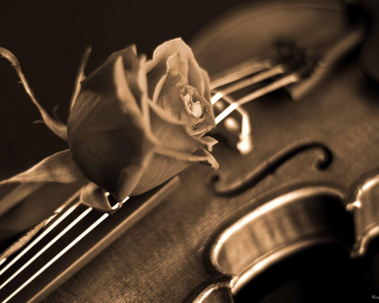 Rose and Violin Wallpaper - Music Wallpaper (28520430) - Fanpop