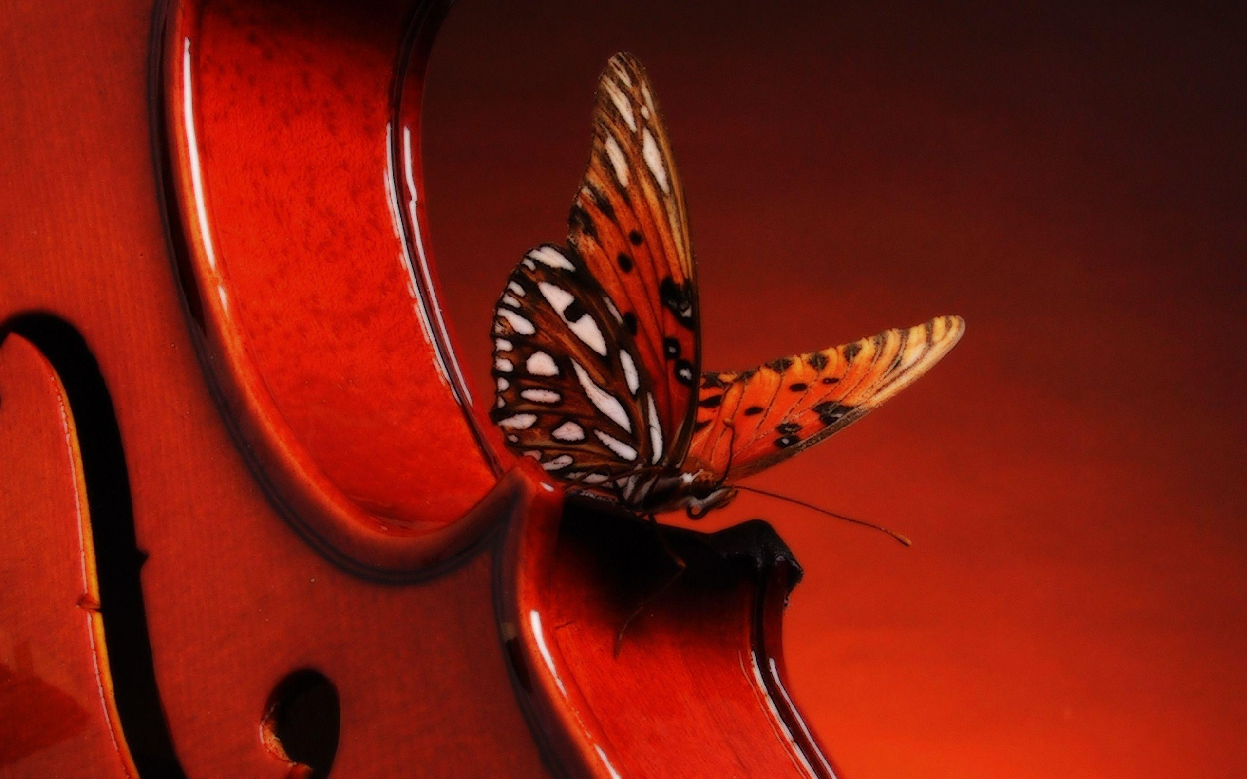 Hd Wallpapers Violin 2560 X 1600 2369 Kb Jpeg | HD Wallpapers ...