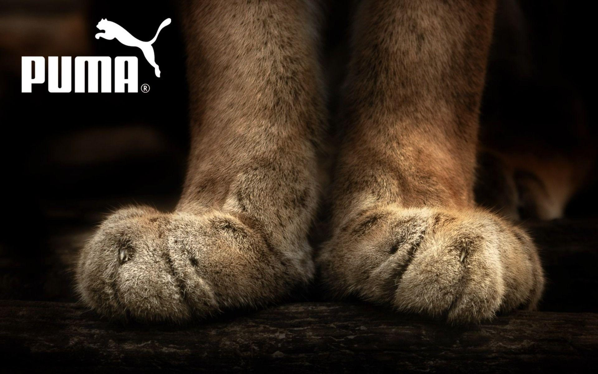 Puma wallpapers and images - wallpapers, pictures, photos