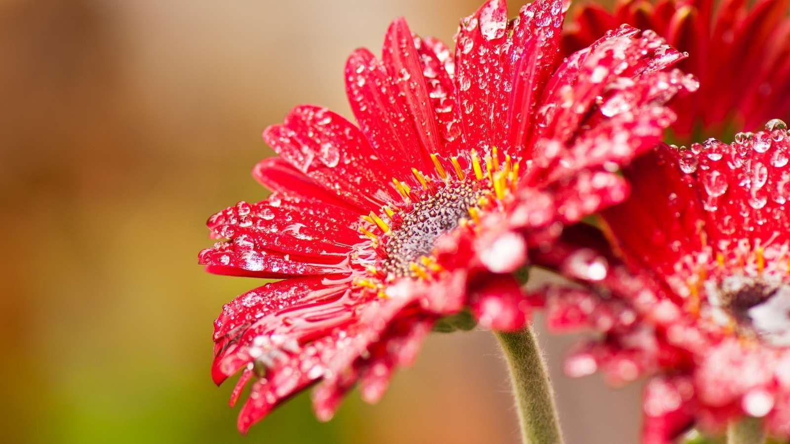 Water Flowers Photos HD | HD Wallpapers Pulse