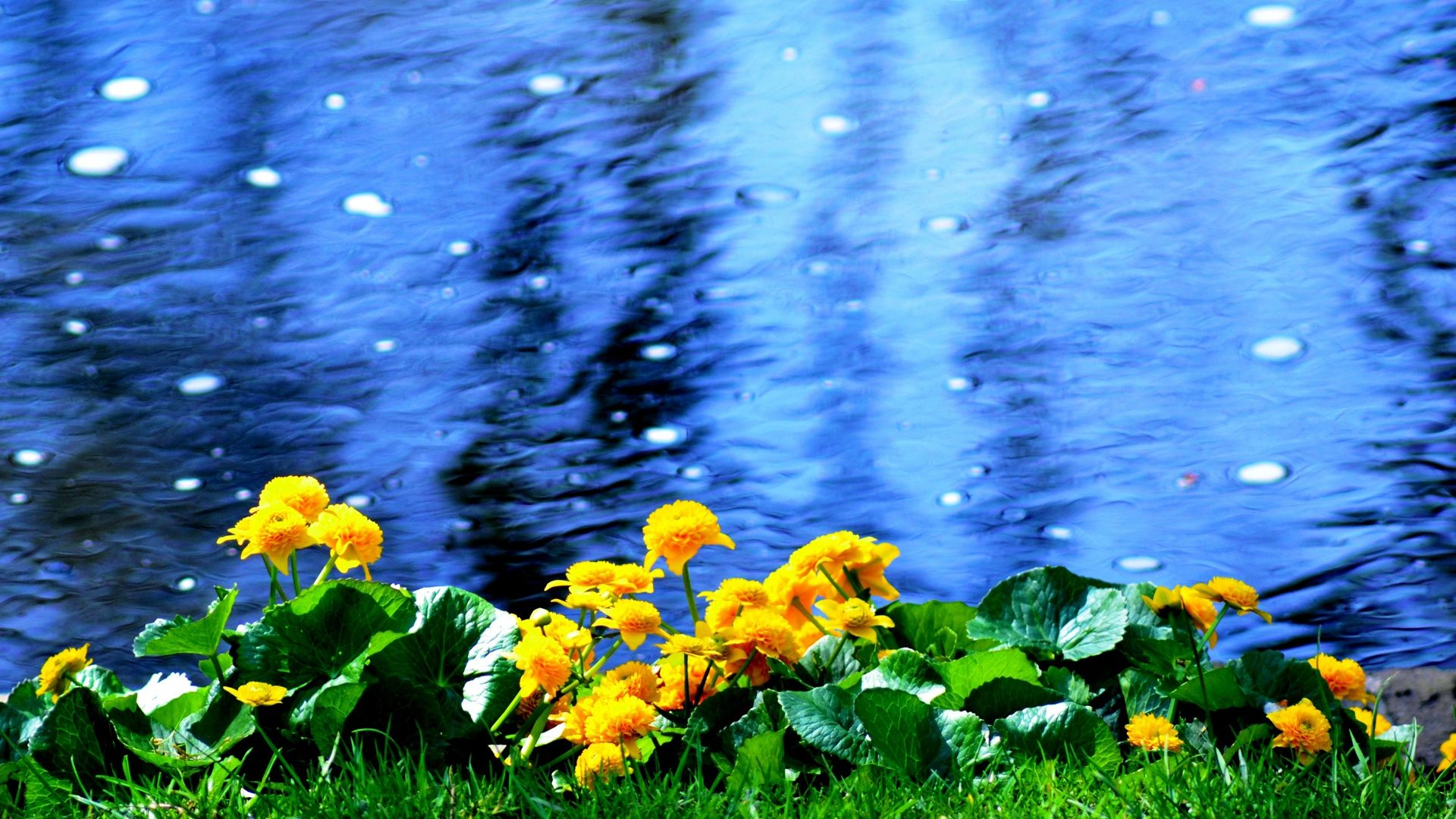 Wallpaper Flowers, Beach, Nature, Water HD, Picture, Image