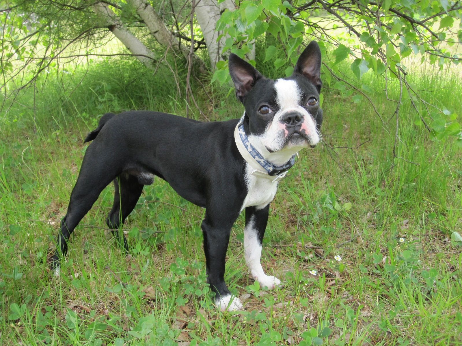 Very photogenic picture of my dog at the park. *Featured on www ...