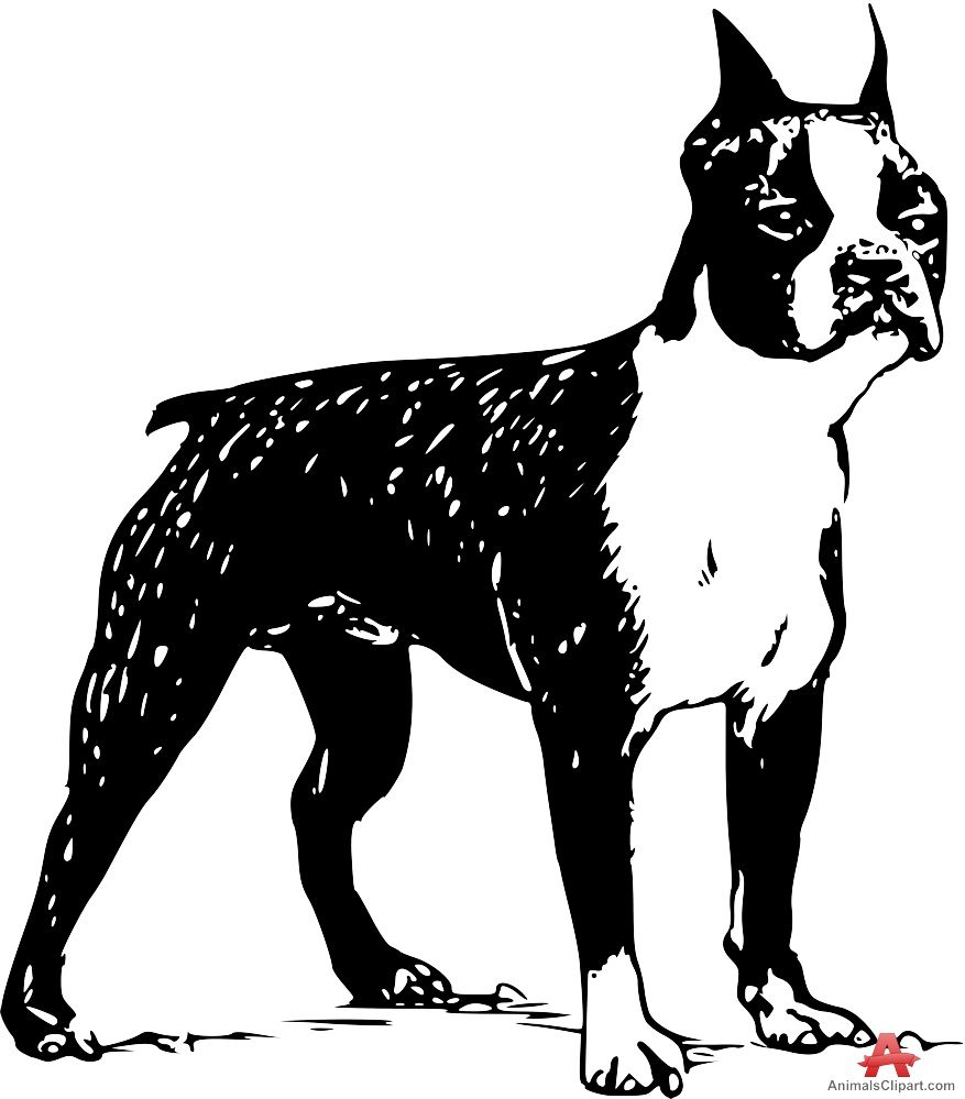 Boston Terrier clipart wallpaper - Pencil and in color boston ...