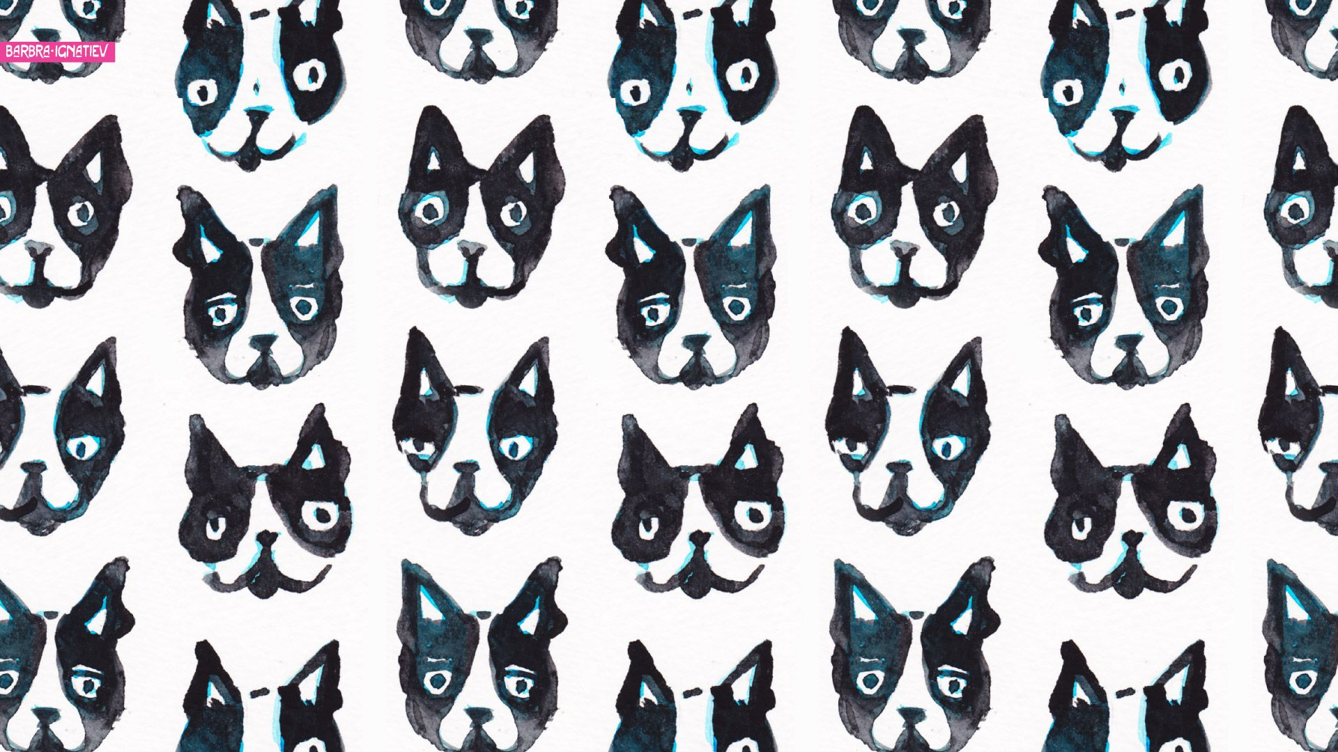 Photo Collection Boston Terrier Wallpaper For Computer