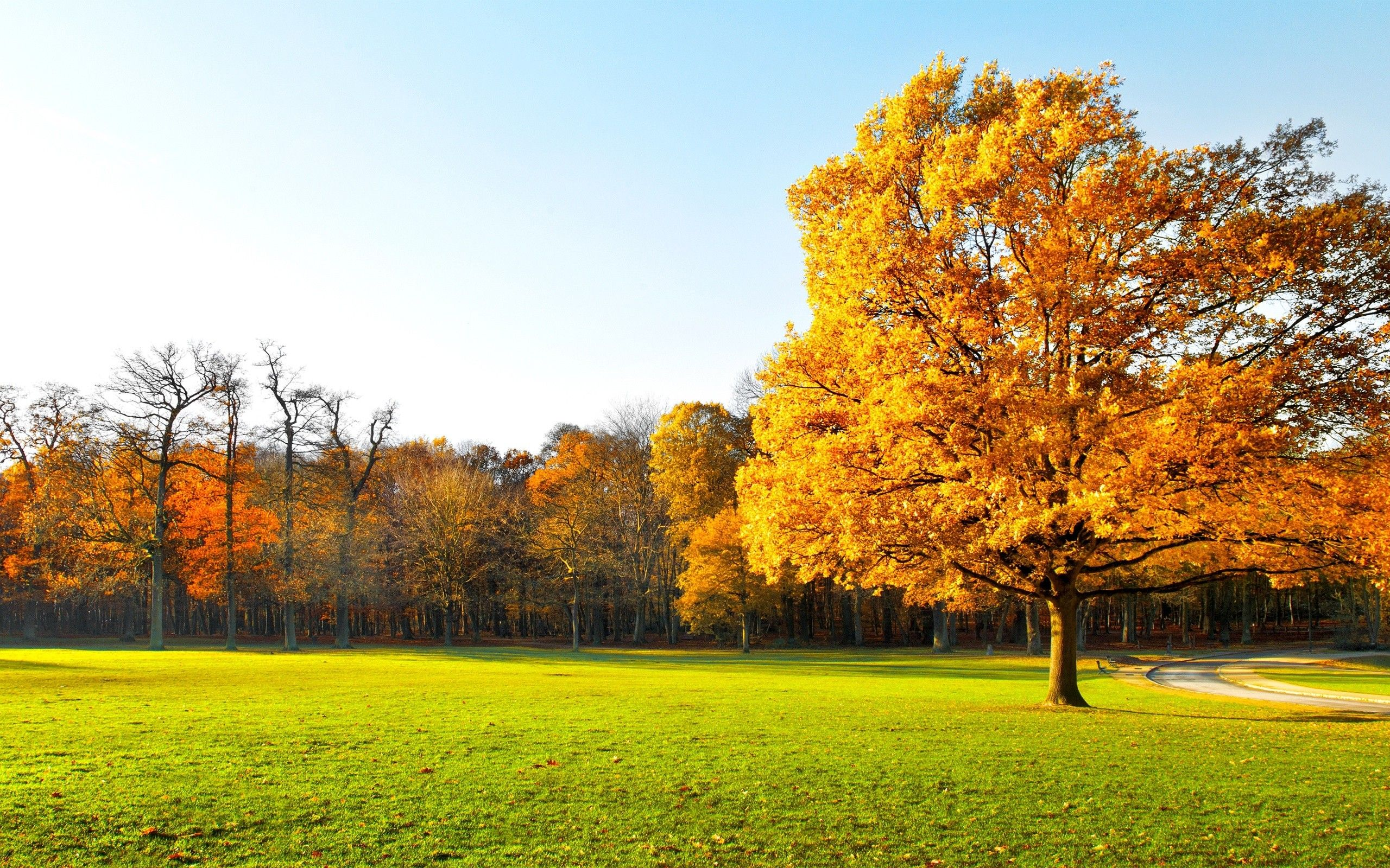 Trees: Autumn Beautiful Panorama Landscape Nature Garden Trees ...