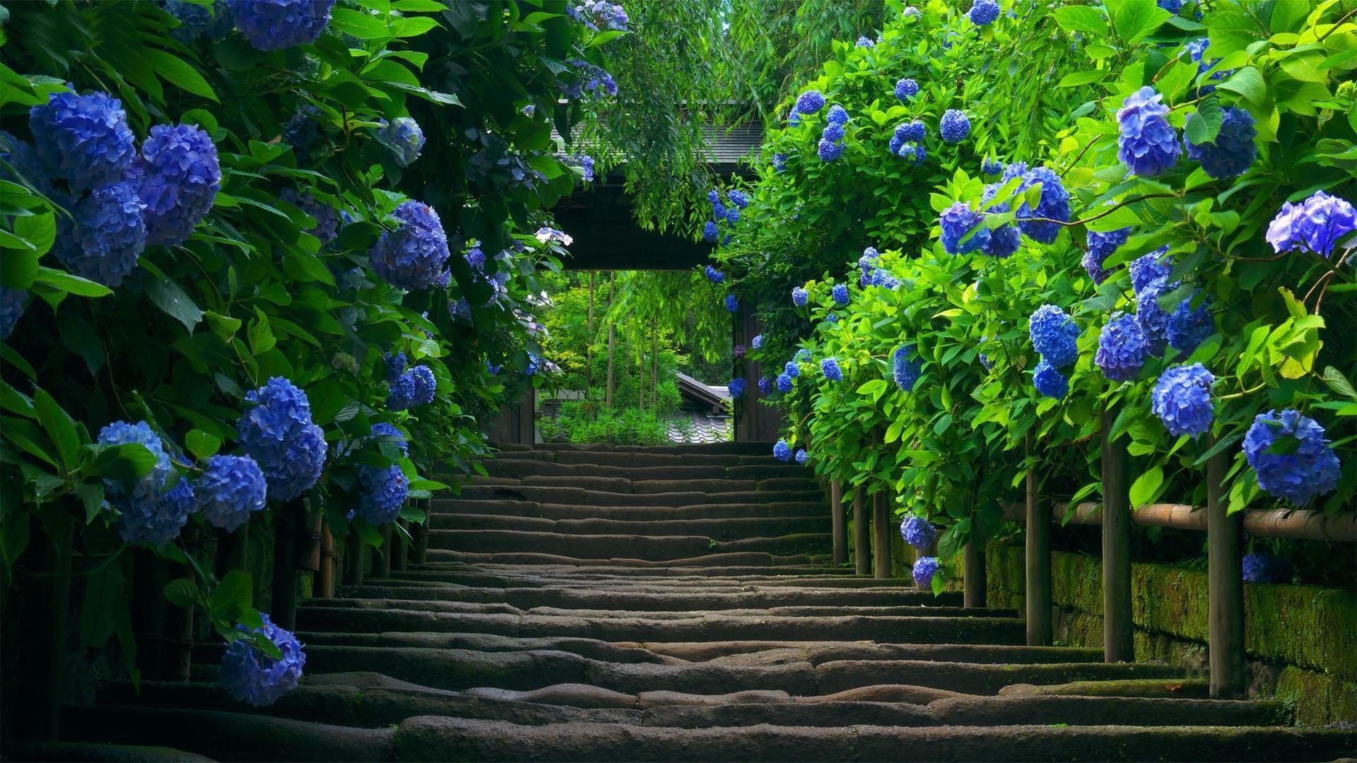 25 Amazing Garden Photos in HD | 4 SEASONS PARADISE | Pinterest ...