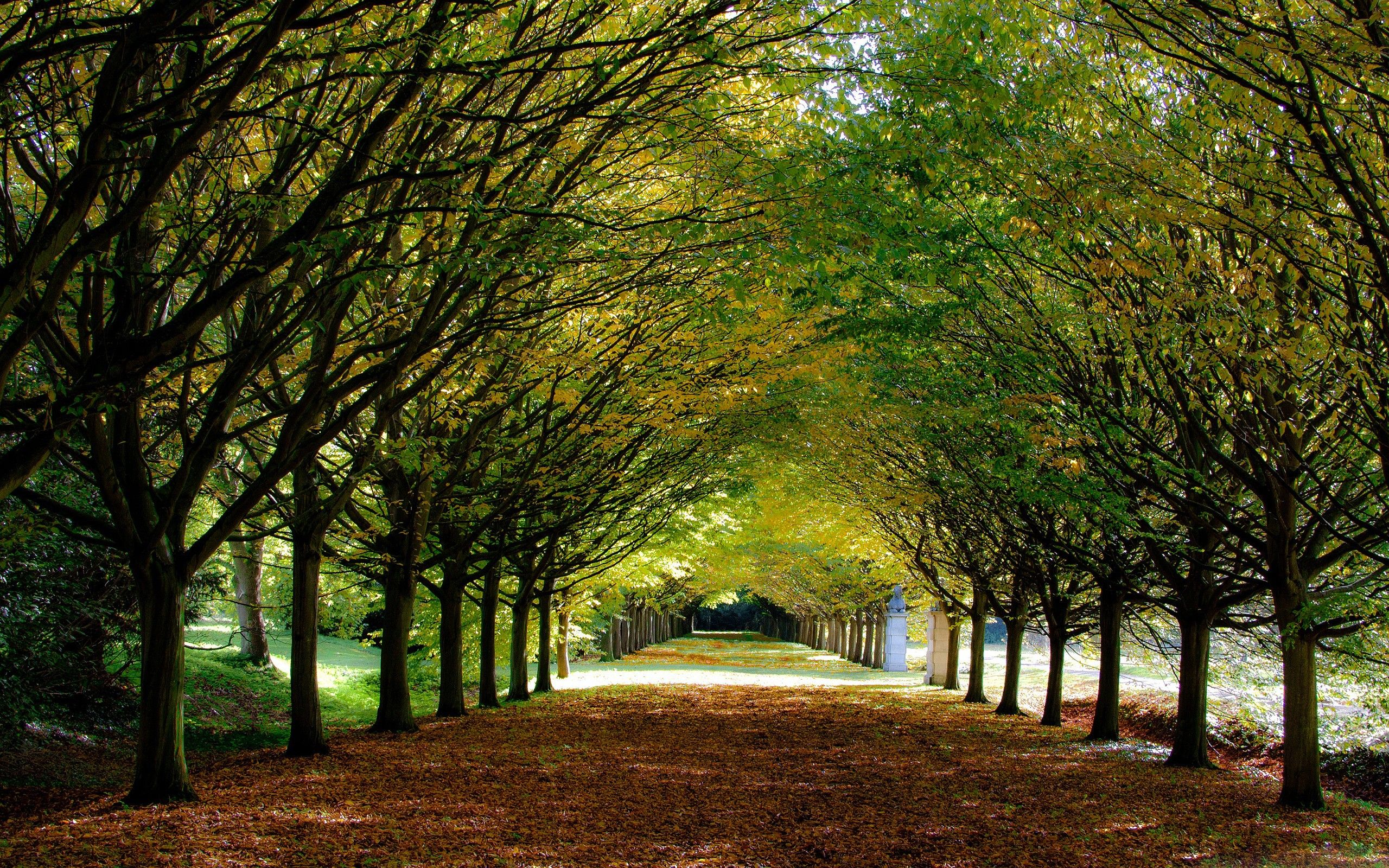 Forest Garden Trees Beautiful Path Forests Nature Leafs Hd Live ...