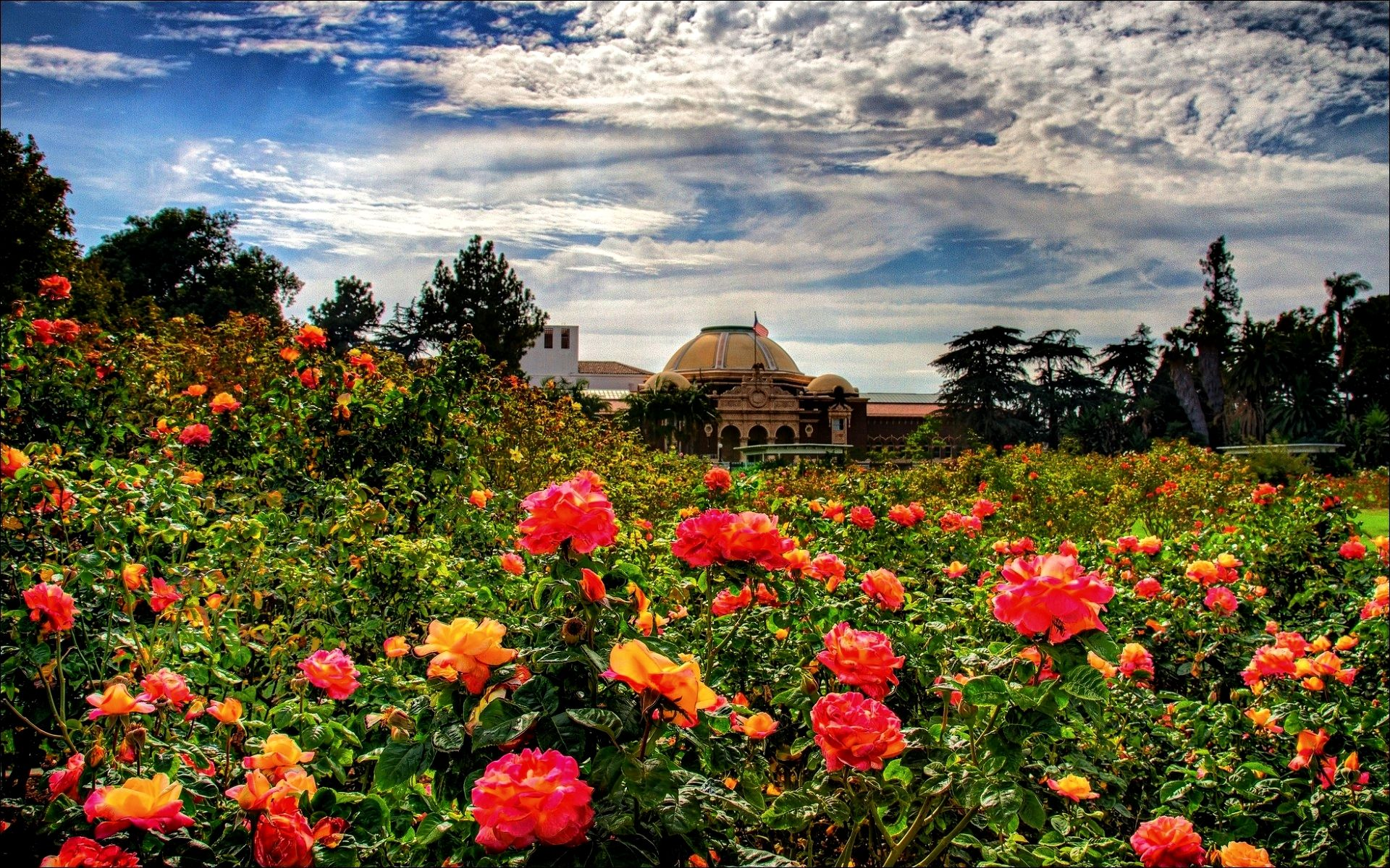 Rose Garden Hd Wallpaper 1080p Full Pics Desktop Hoontoidly Of ...