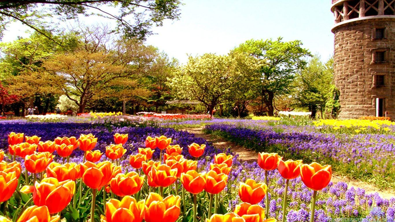 Flowers: Nature Day Flower Garden Spring Peaceful Wallpaper 3d ...