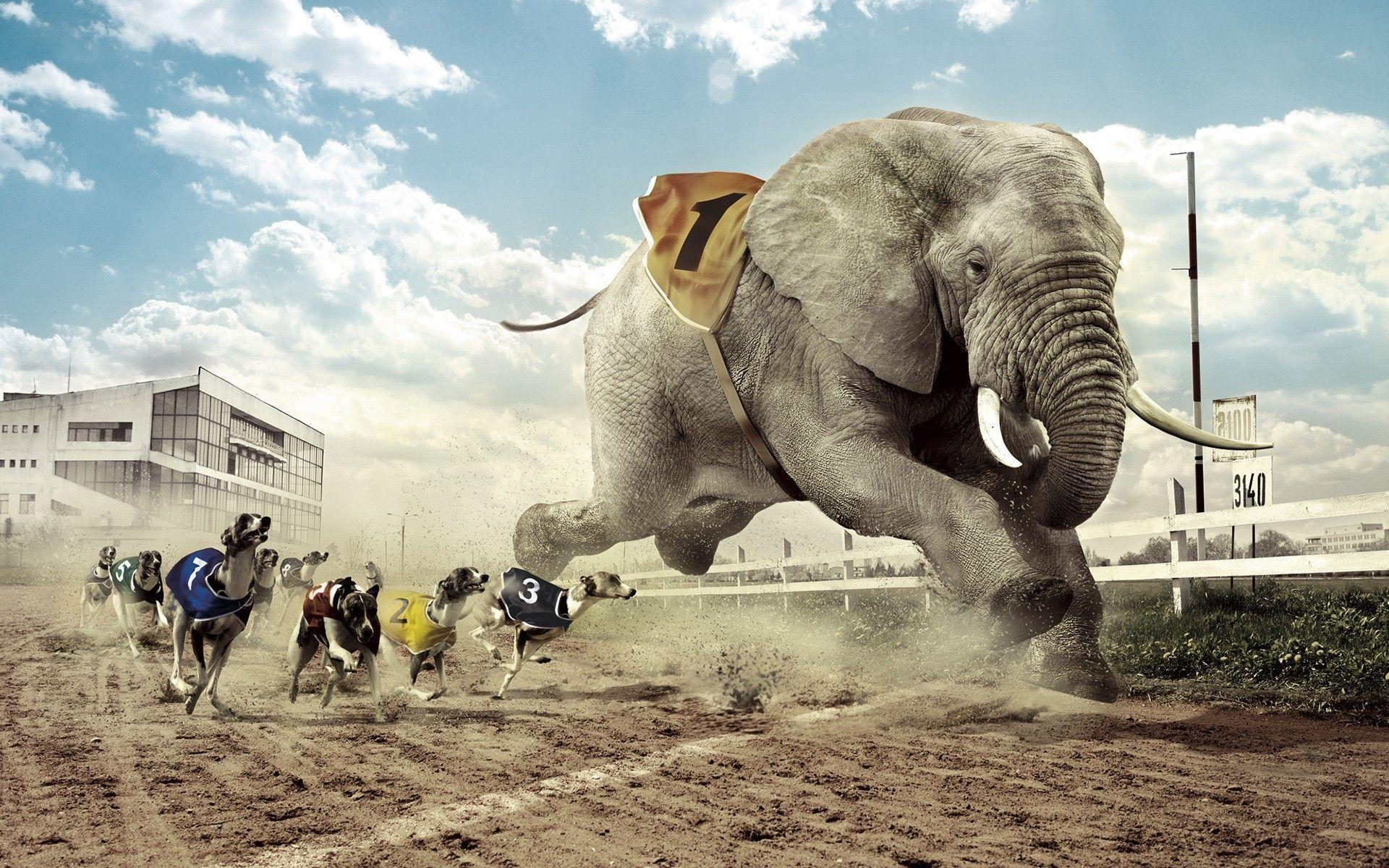 Dogs racing an elephant Wallpapers #