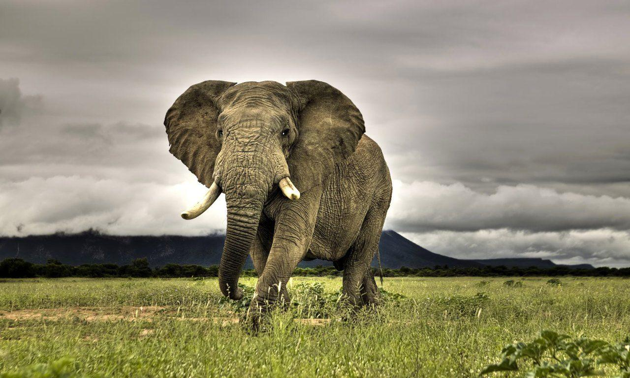 african_elephant_wallpapers