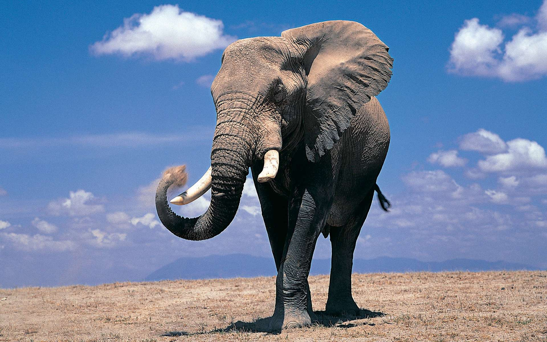 Elephant Computer Wallpapers, Desktop Backgrounds 1920x1200 Id: 324220