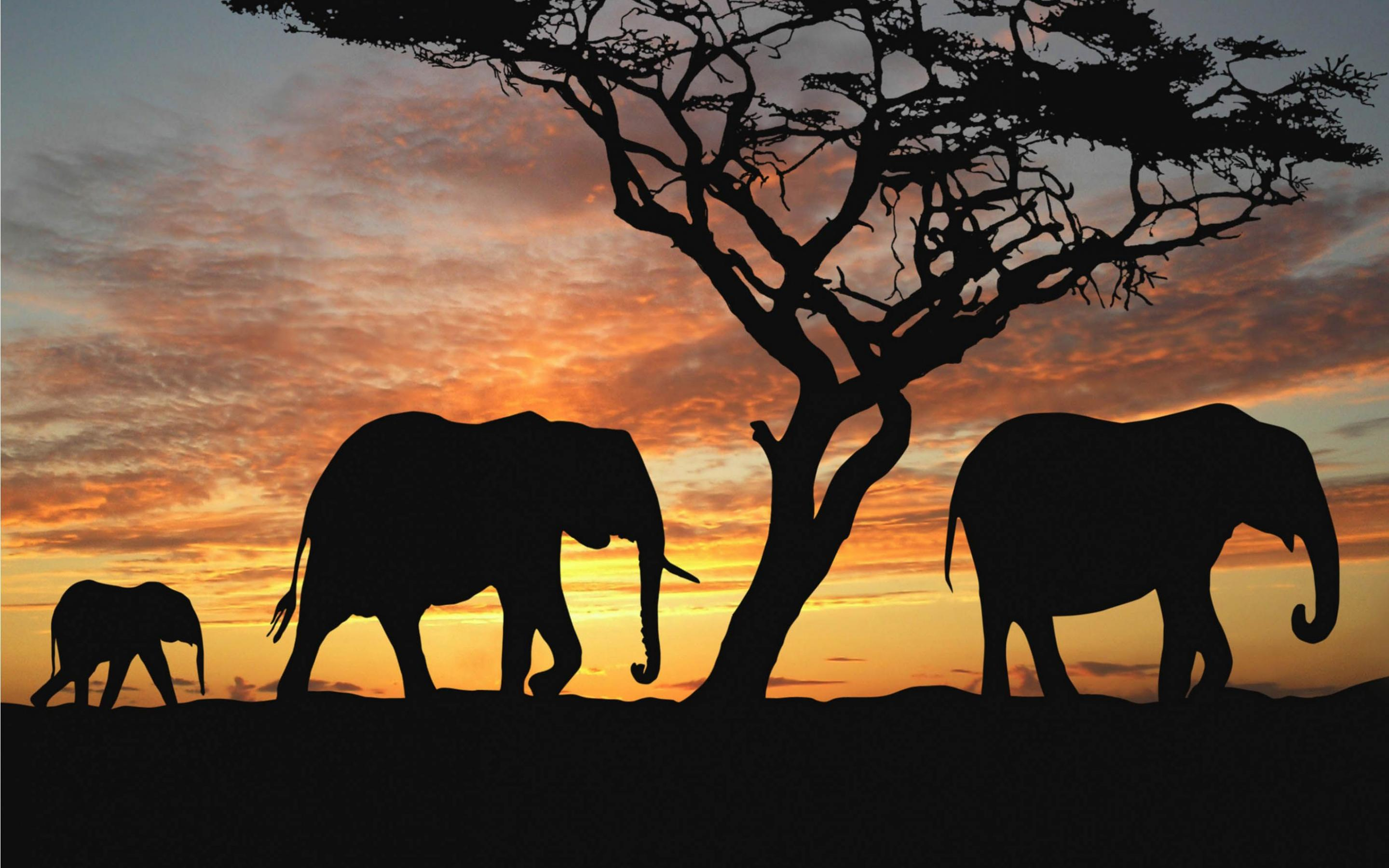 macbook elephant wallpaper - Wallpapers