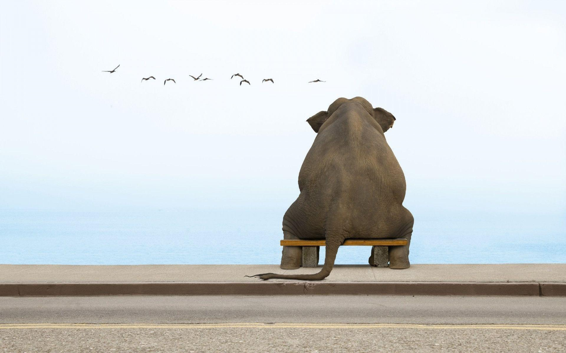1920x1200 Sitting Elephant Wallpapers