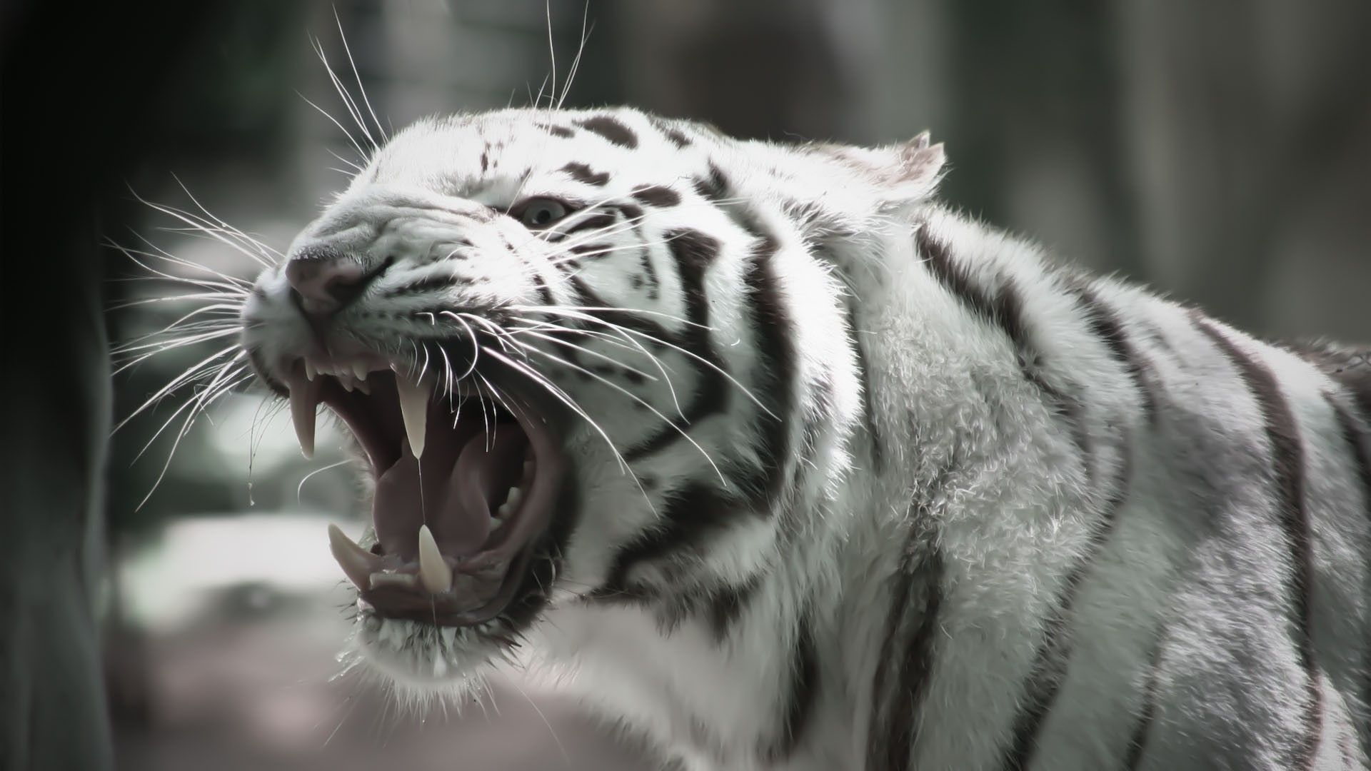 Tiger Wallpaper 3d Phone | Animals Wallpapers | Pinterest | Tiger ...