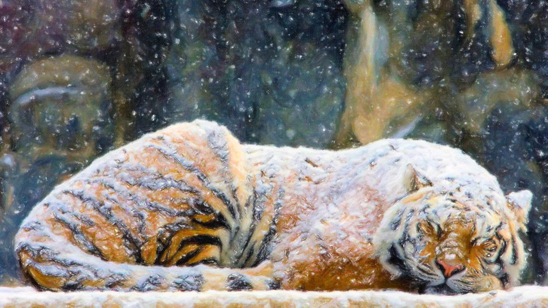 Sleeping Tiger Snow - WallDevil