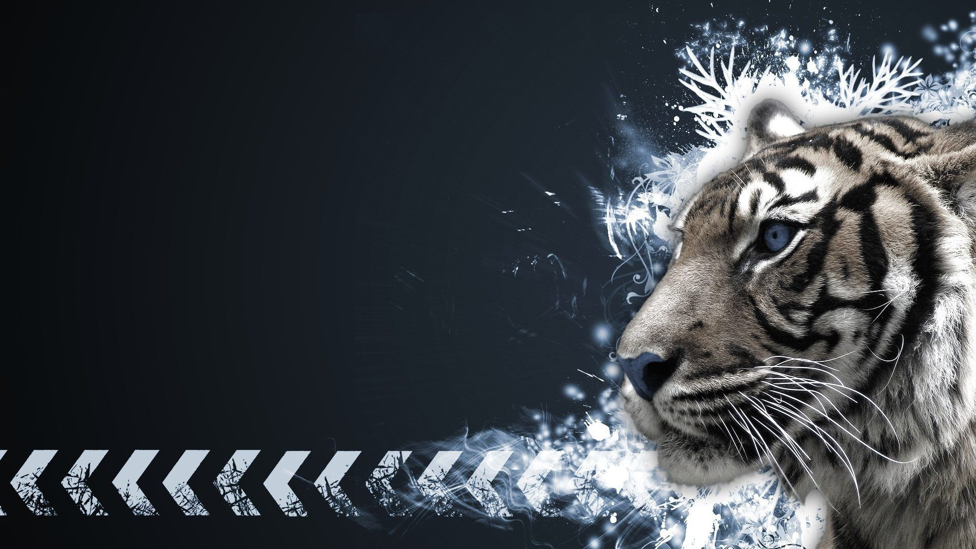 Tigers Tag wallpapers: Lions White Tigers Tiger Liger Cats ...