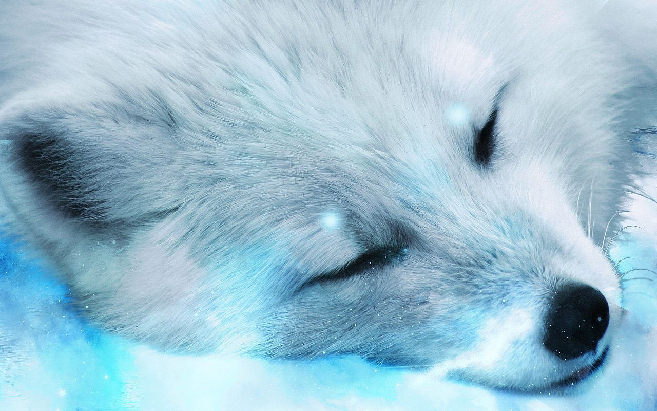 Arctic Fox Wallpapers - LyhyXX.com