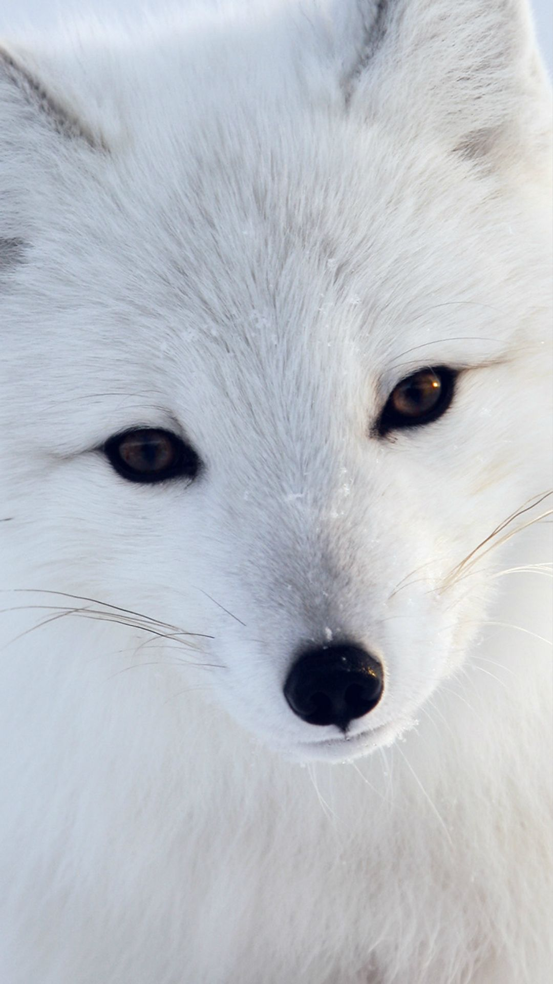 Adorable animals - My Garden | Foxes, Arctic fox and Animal