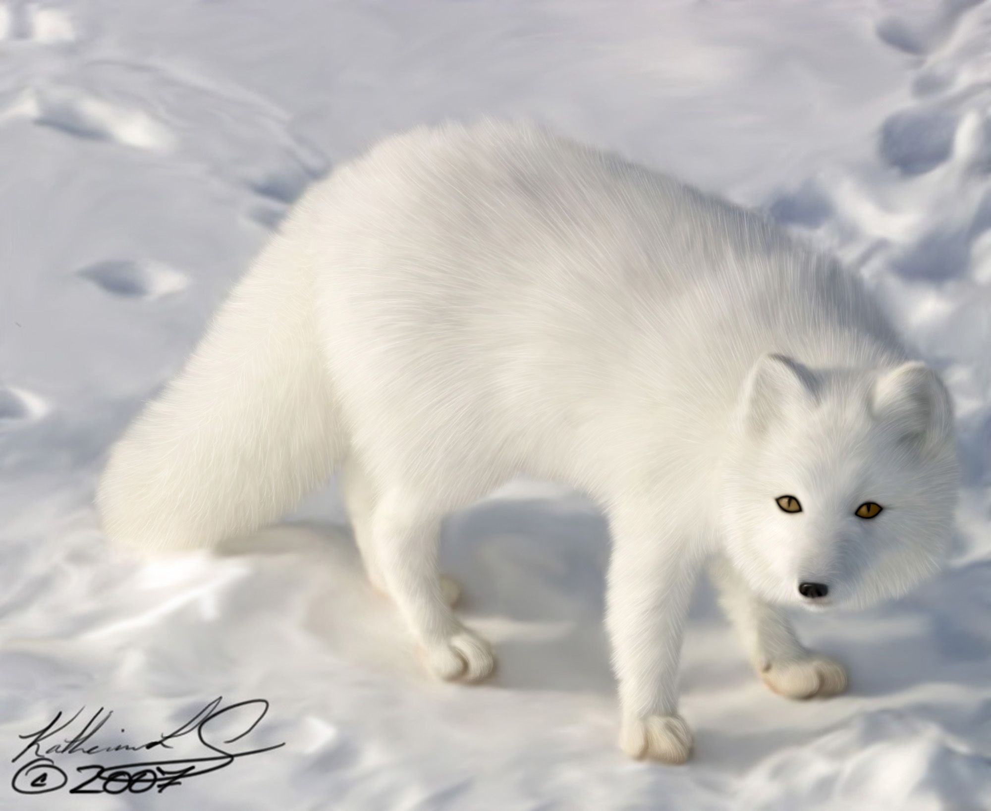Desktop arctic fox wallpaper download