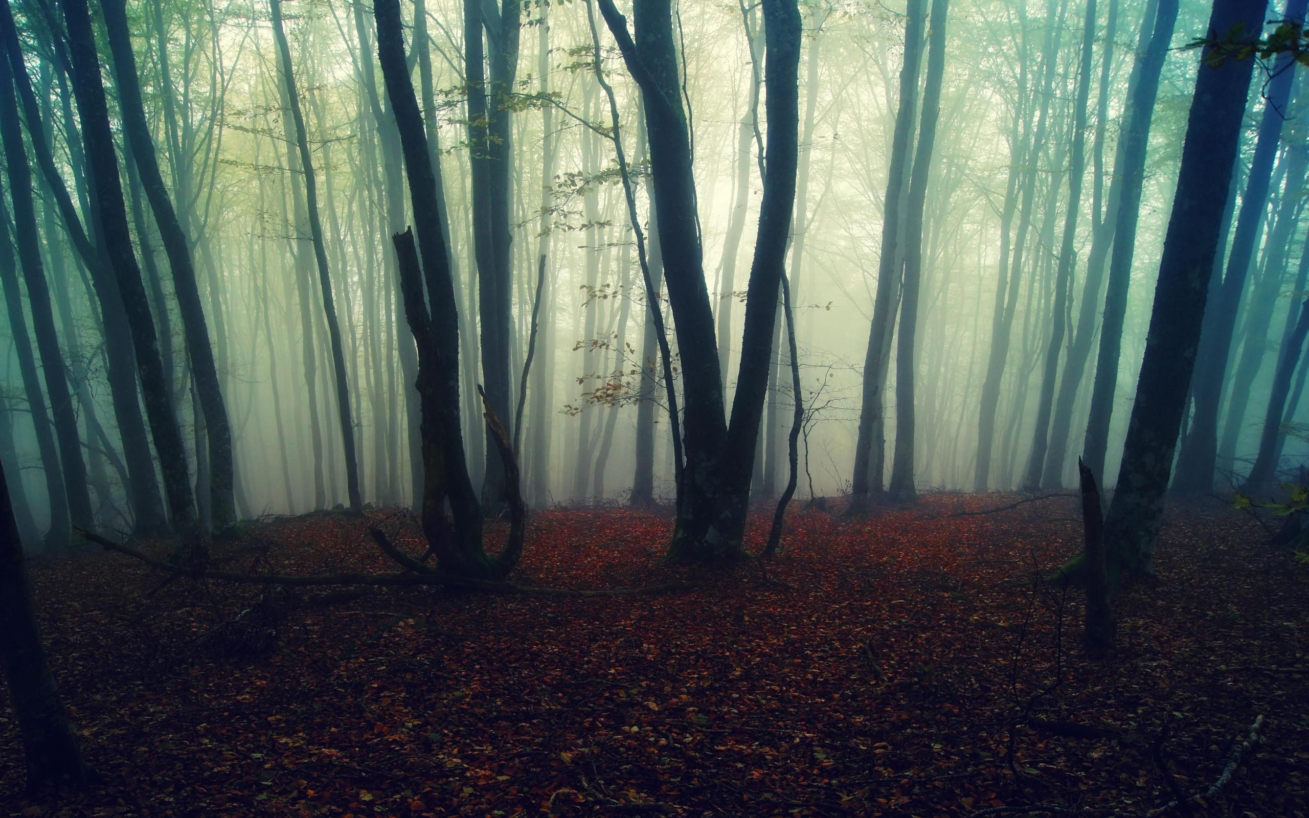 Foggy Forest Wallpaper HD Resolution #lJA | Earth | Pinterest