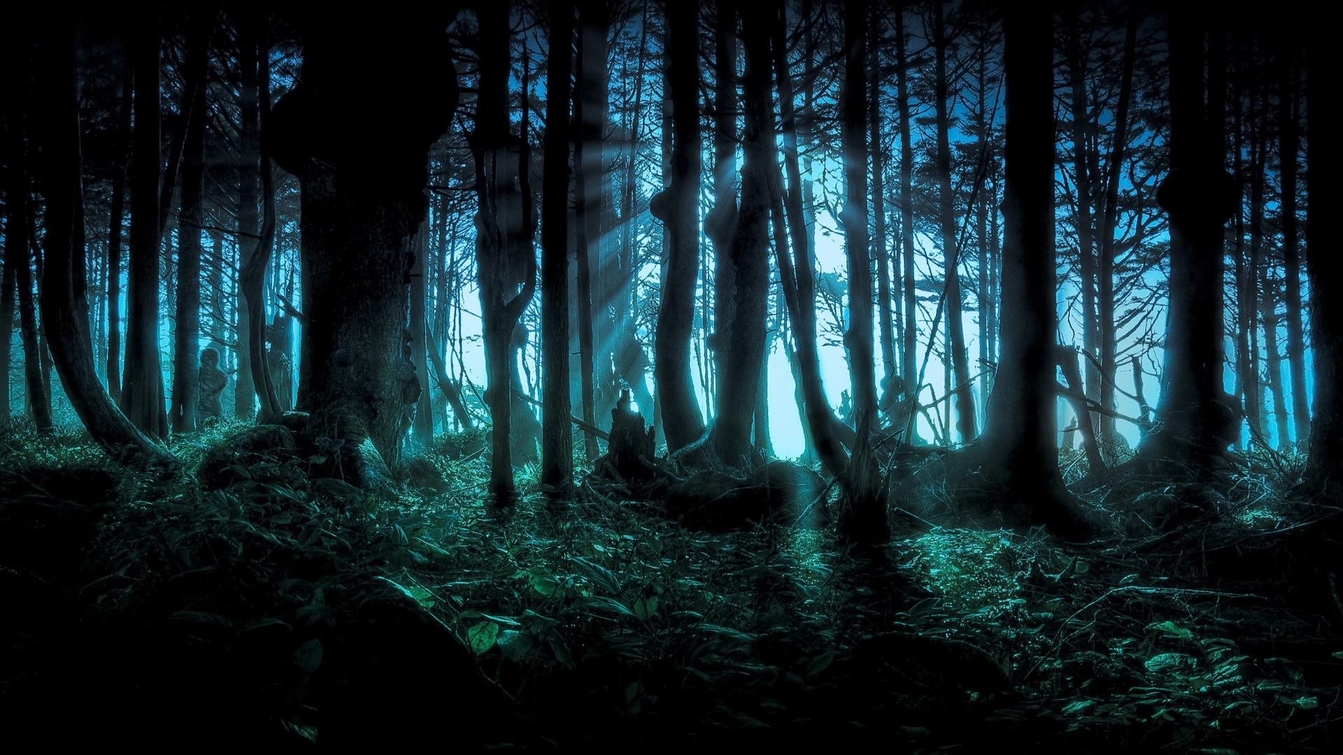 dark forest wallpapers high quality