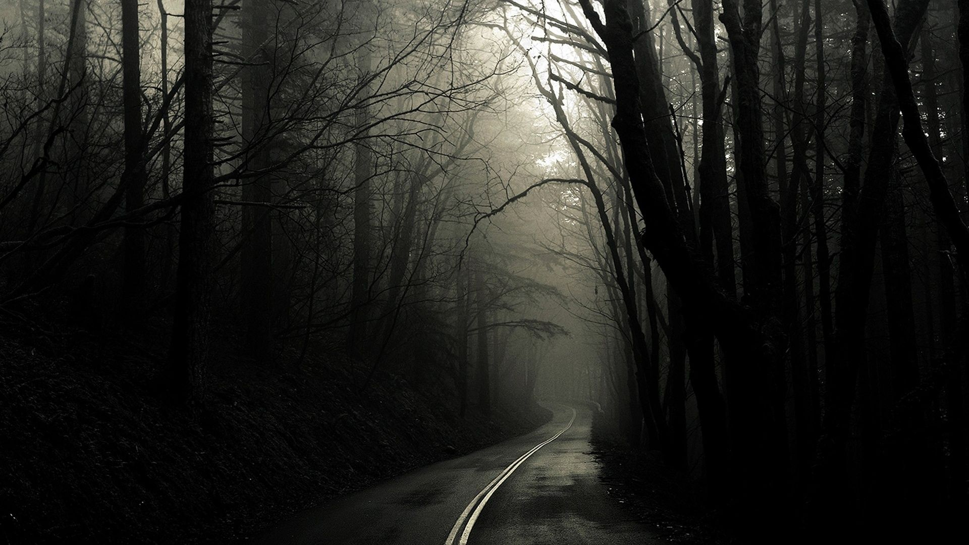 Spooky Forest Awesome Photo | 403514314 Spooky Forest Wallpapers ...