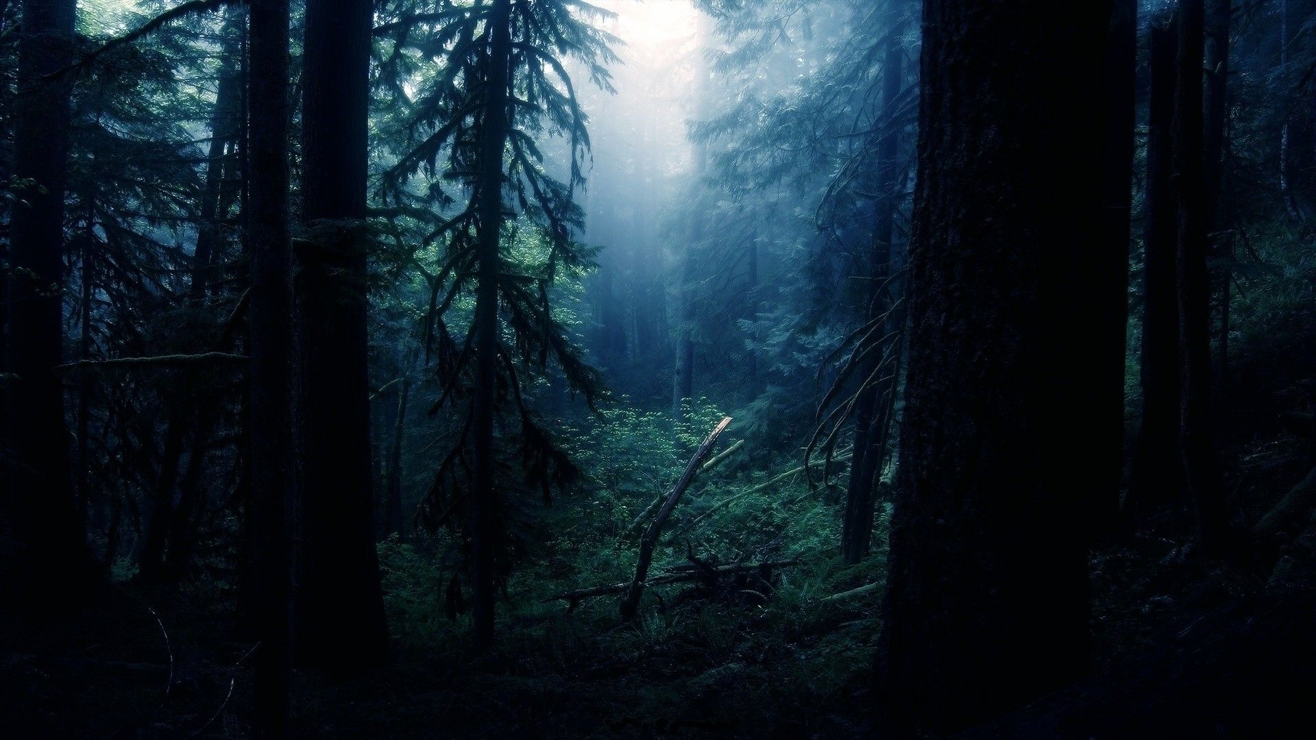 Trees #Nature #Forest #Wallpaper   Photography Wallpapers ...