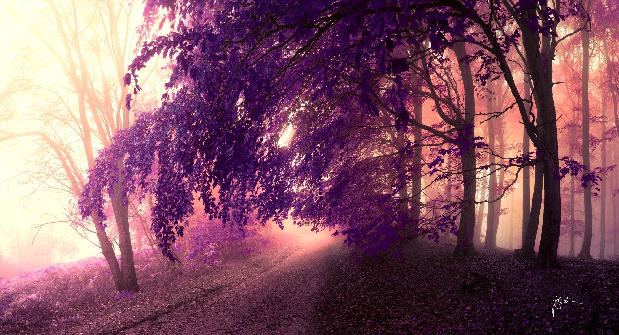 Forests: Nature Trees Forbidden Dreaming Purple Path Dreamer ...