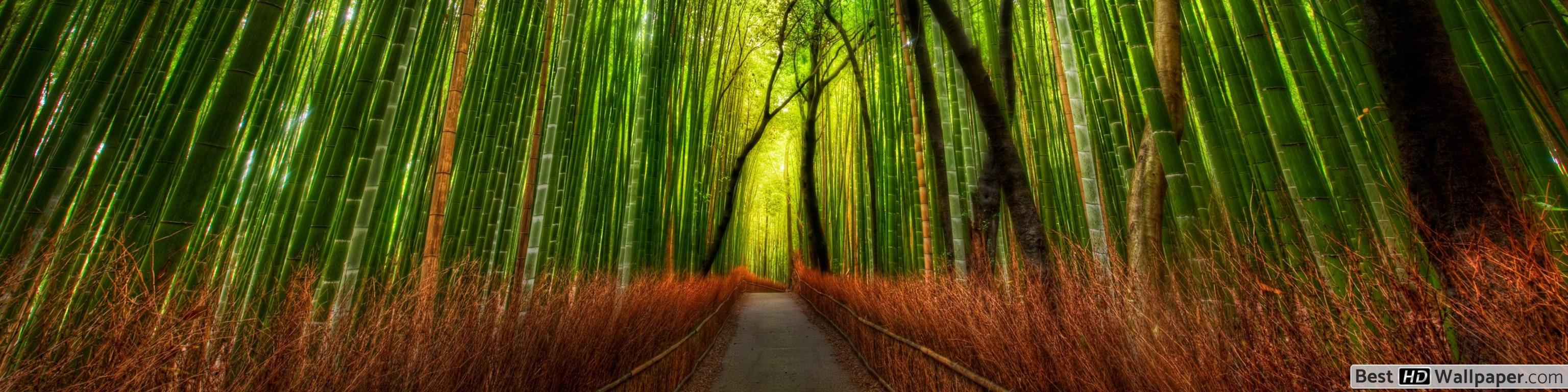 Bamboo trees and forest HD wallpaper download