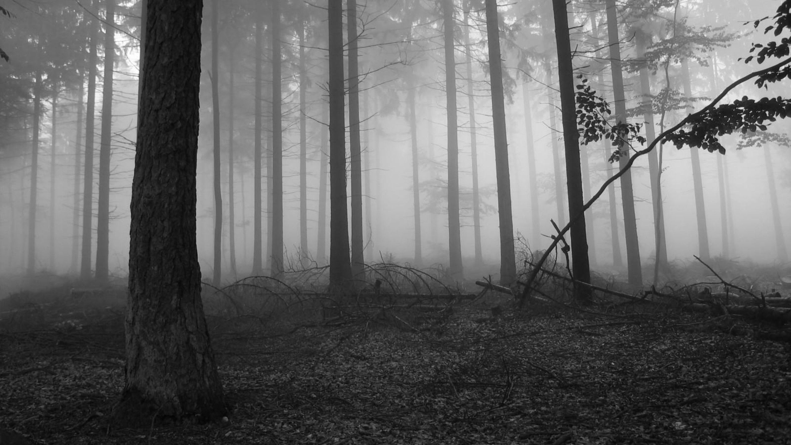 Widescreen Wallpapers of Scary Forest, New Photos