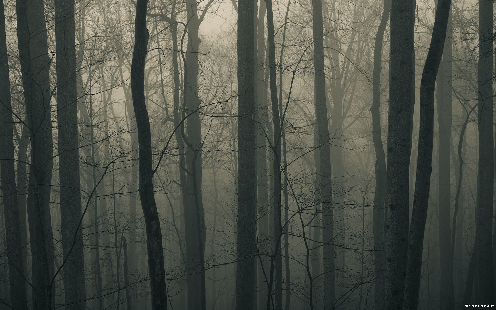 Creepy Forest Backgrounds Group (59+)