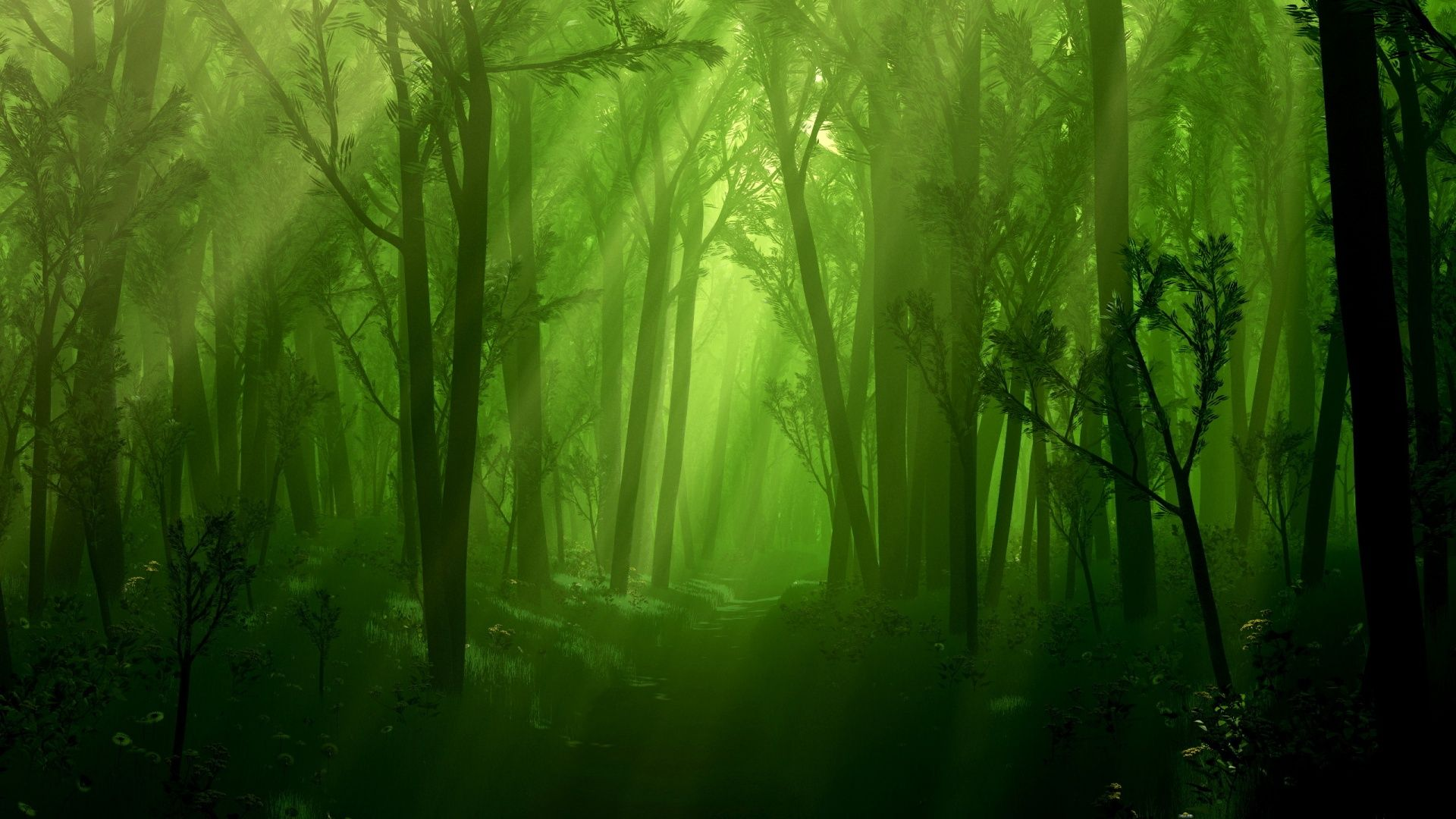 Photo Collection Forest Awesome Wallpapers 14700