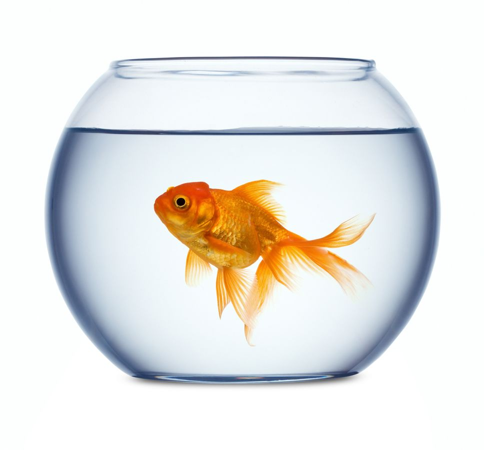 Fish Bowl | Free Download Clip Art | Free Clip Art | on Clipart ...