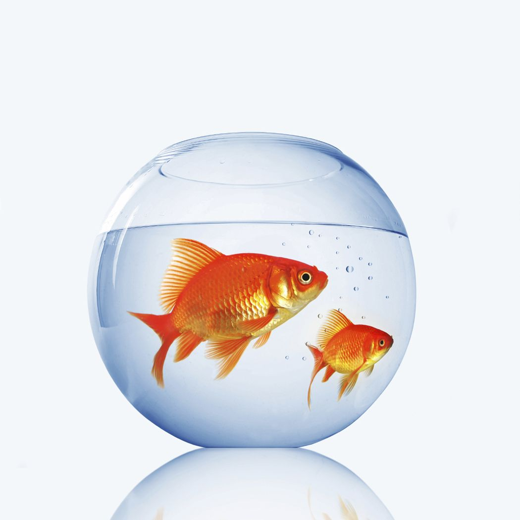 Images of Goldfish In A Fishbowl - #SC