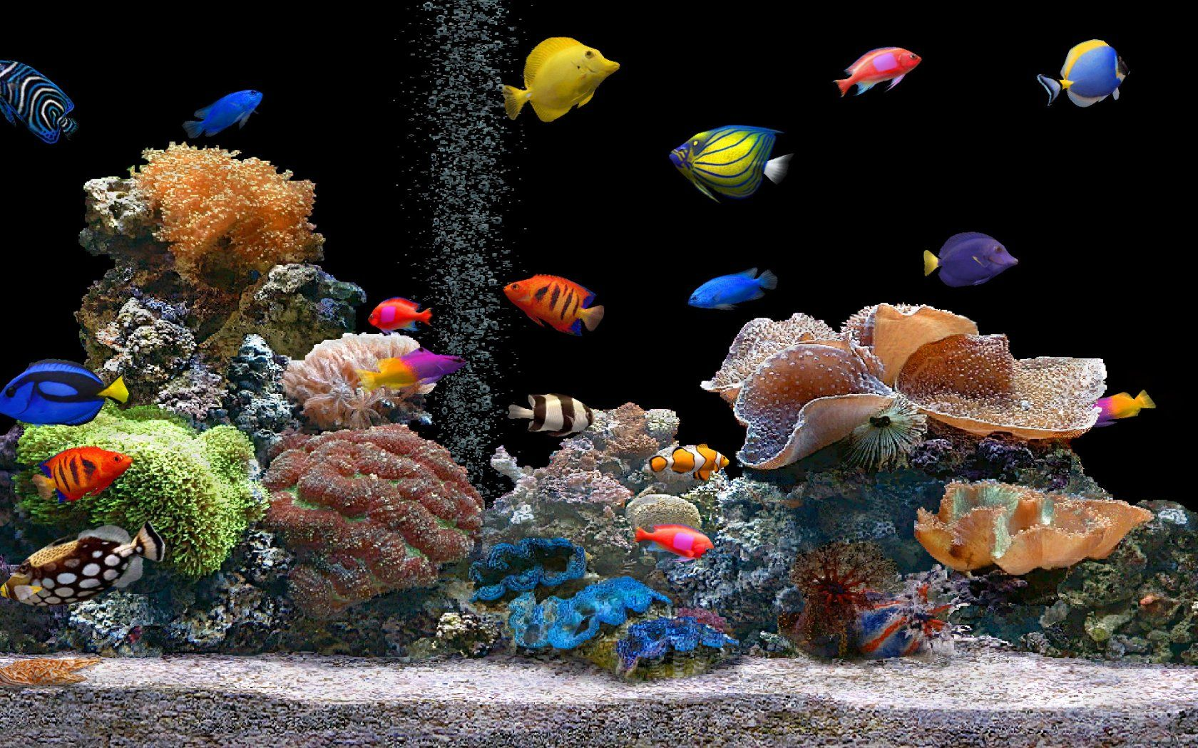 patel travels: Tropical Fish Tank - Tropical Wallpapers