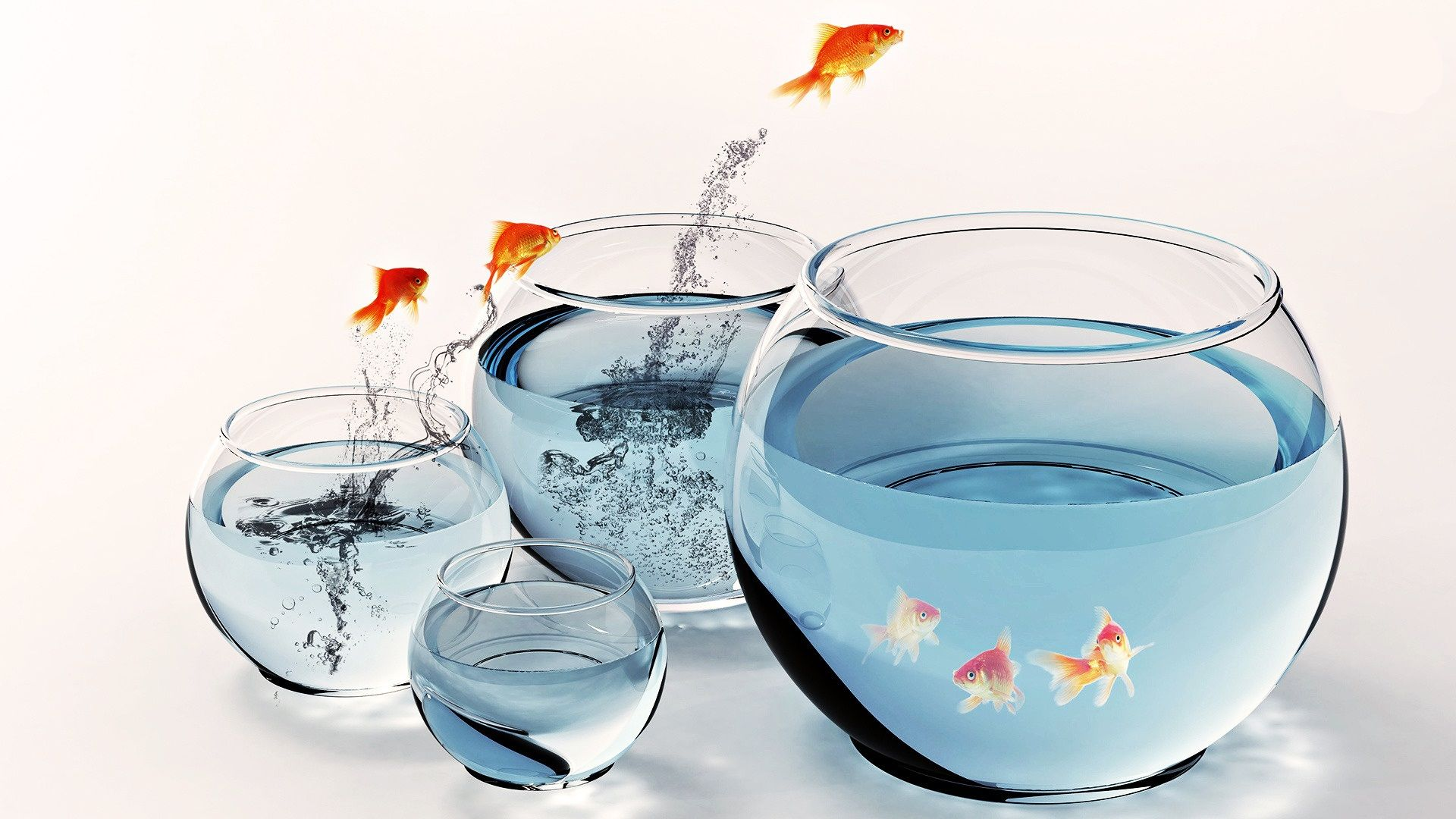 Photo Collection Free Fish Bowl Backgrounds