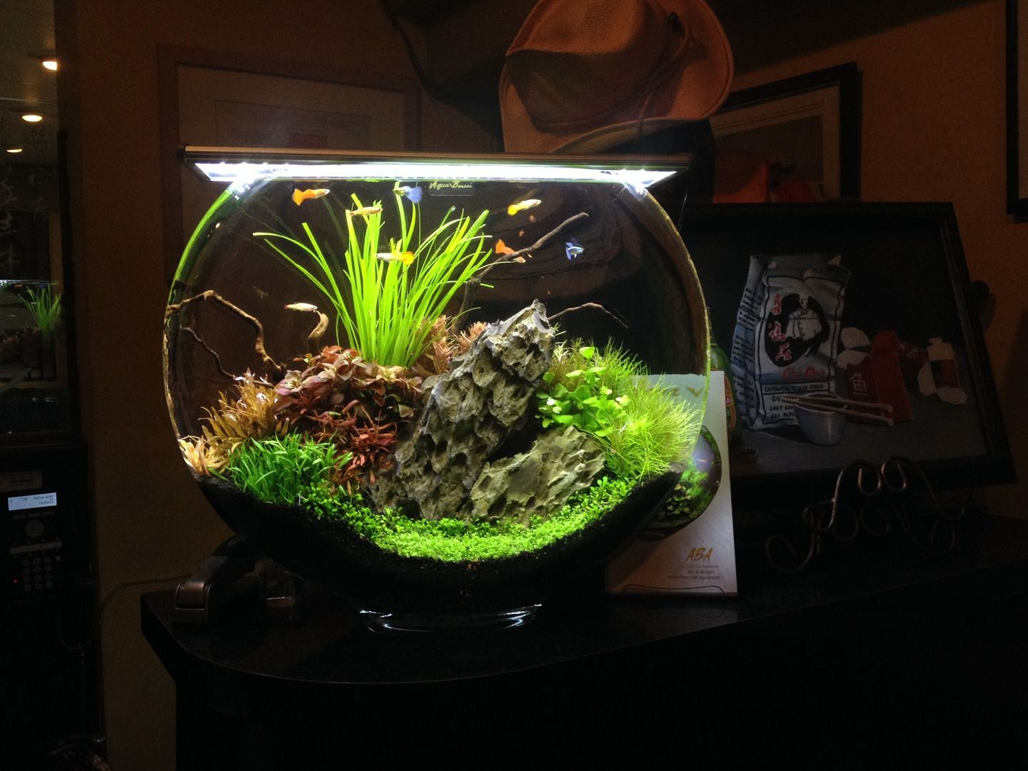 36 best aquarium images on Pinterest | Beautiful, Plants and DIY
