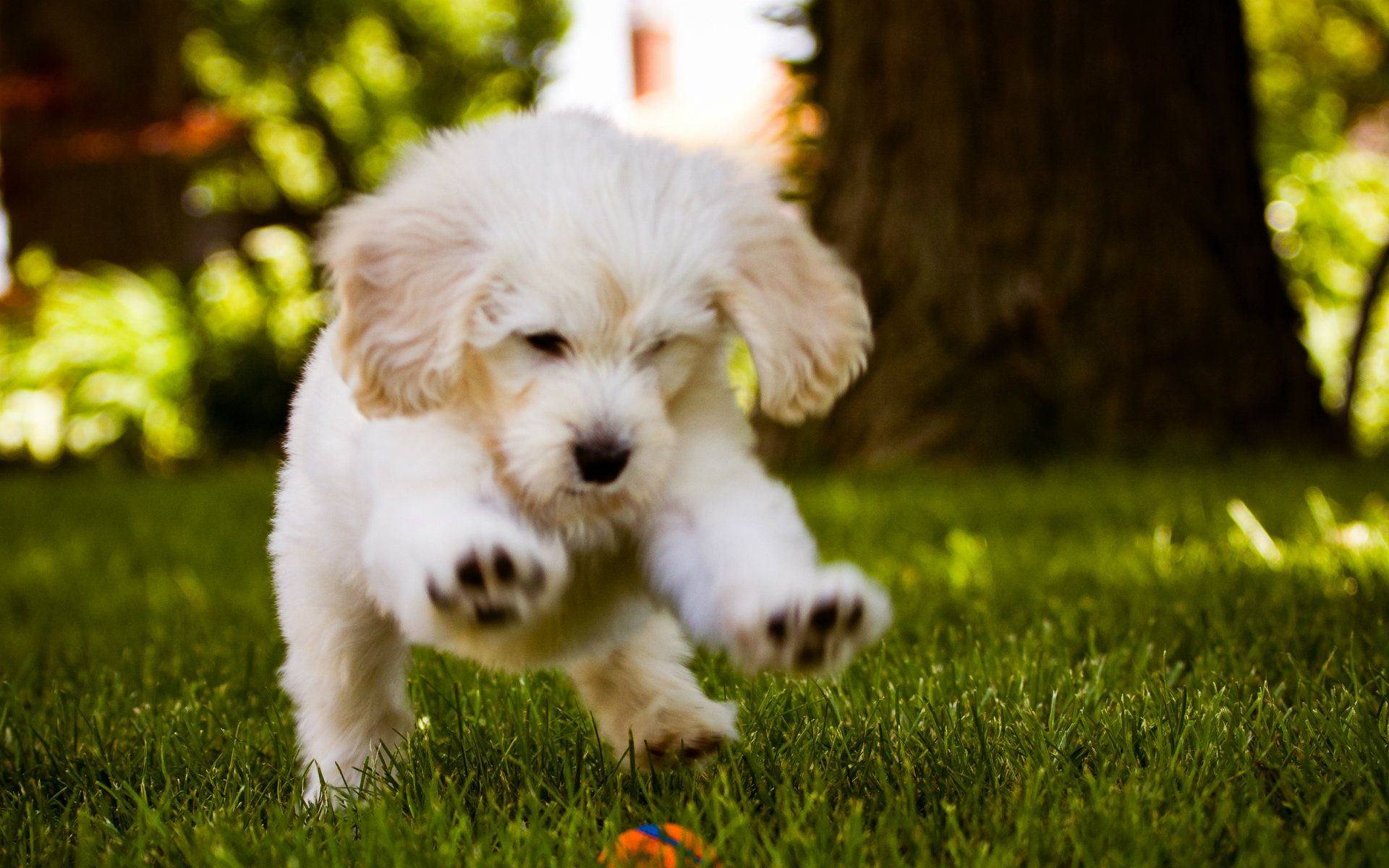 Cute Dogs And Puppies Wallpapers Wallpaper 1920×1200 Cute Pics Of ...