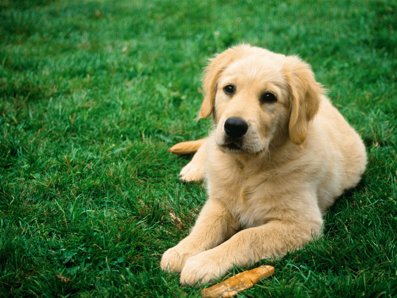 Dog on Green Grass Dog Wallpapers Backgrounds | Dogs Wallpapers ...