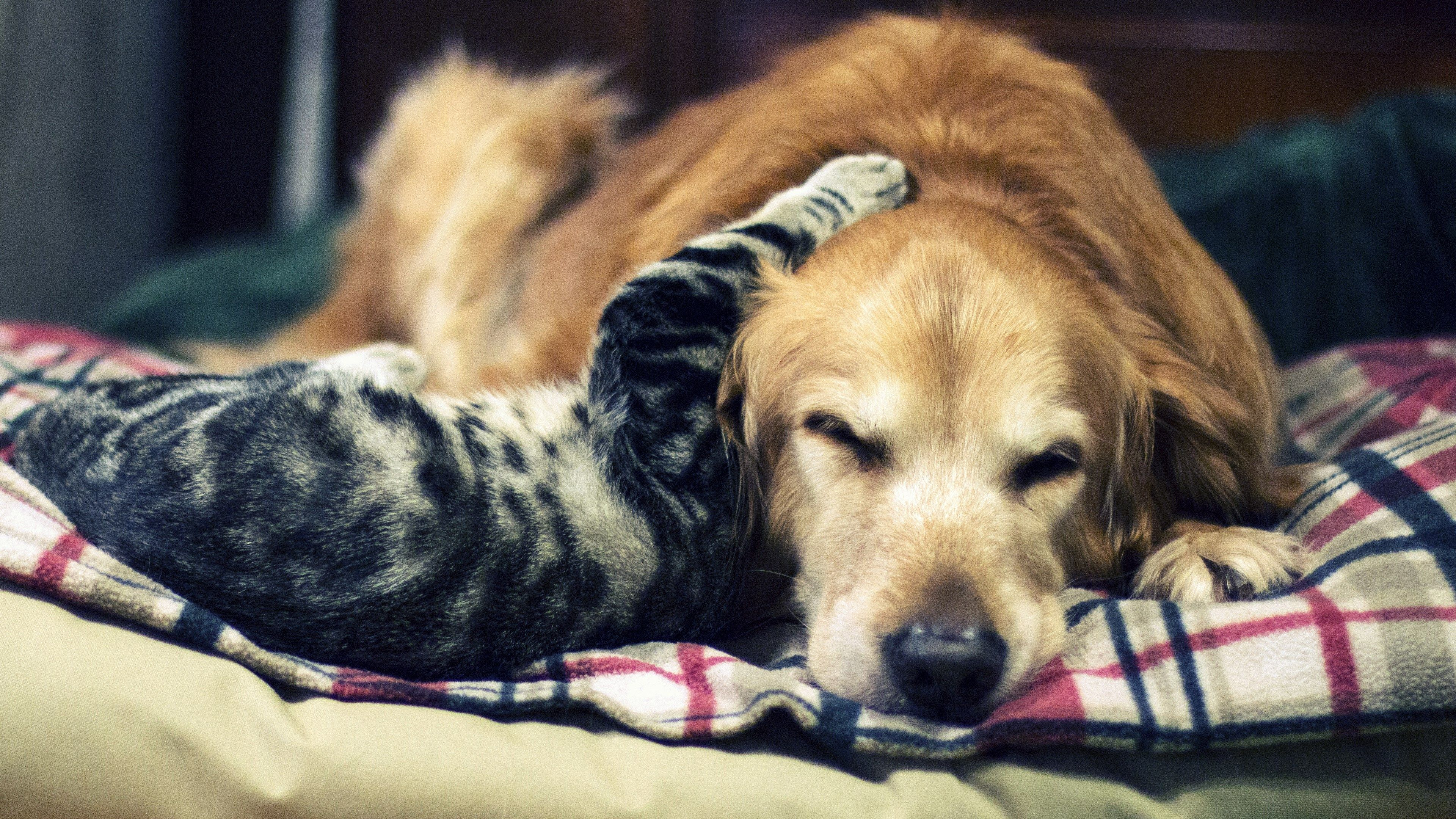 cute cat and dog 4k wallpaper for desktop | ololoshenka ...