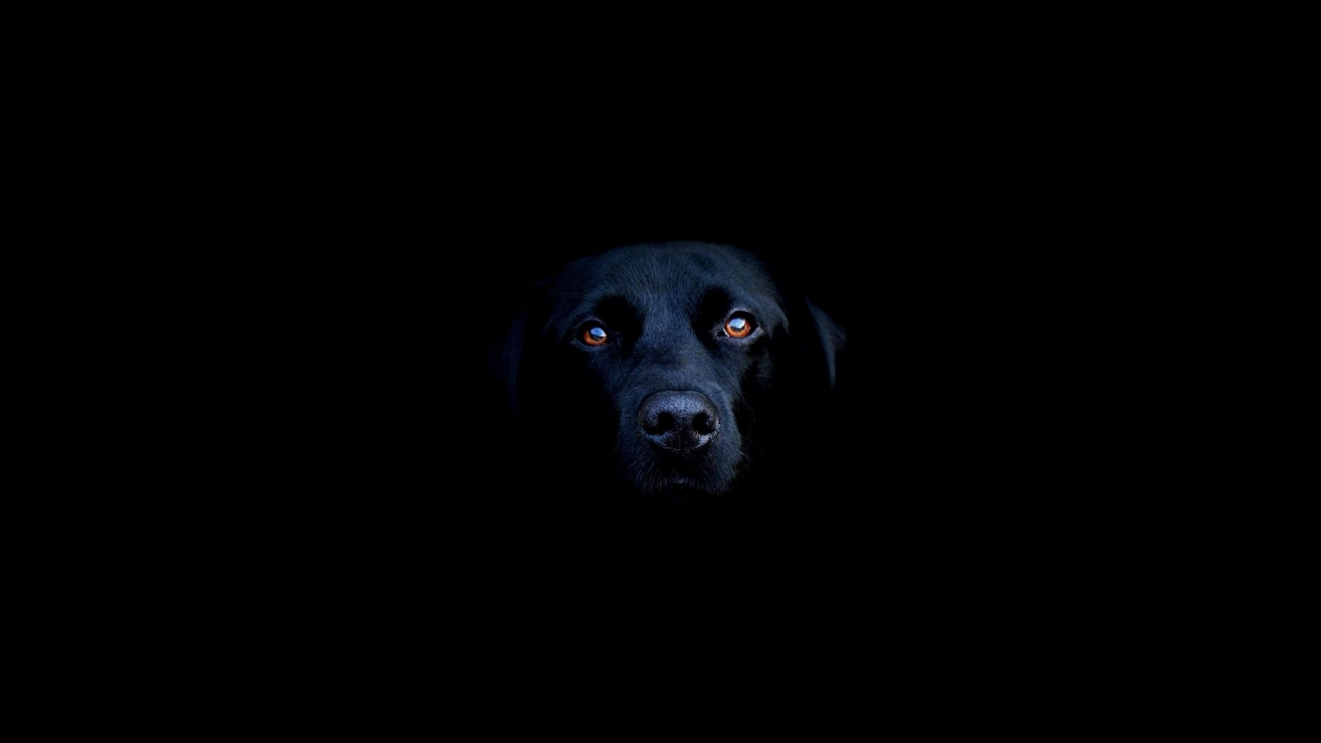 Black Dog HD Wallpapers - Free download latest Black Dog HD ...