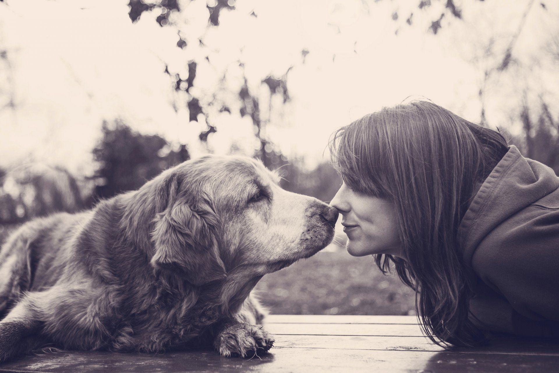 Girl With Dogs Wallpapers Girl With Dogs Modern K Ultra HD ...
