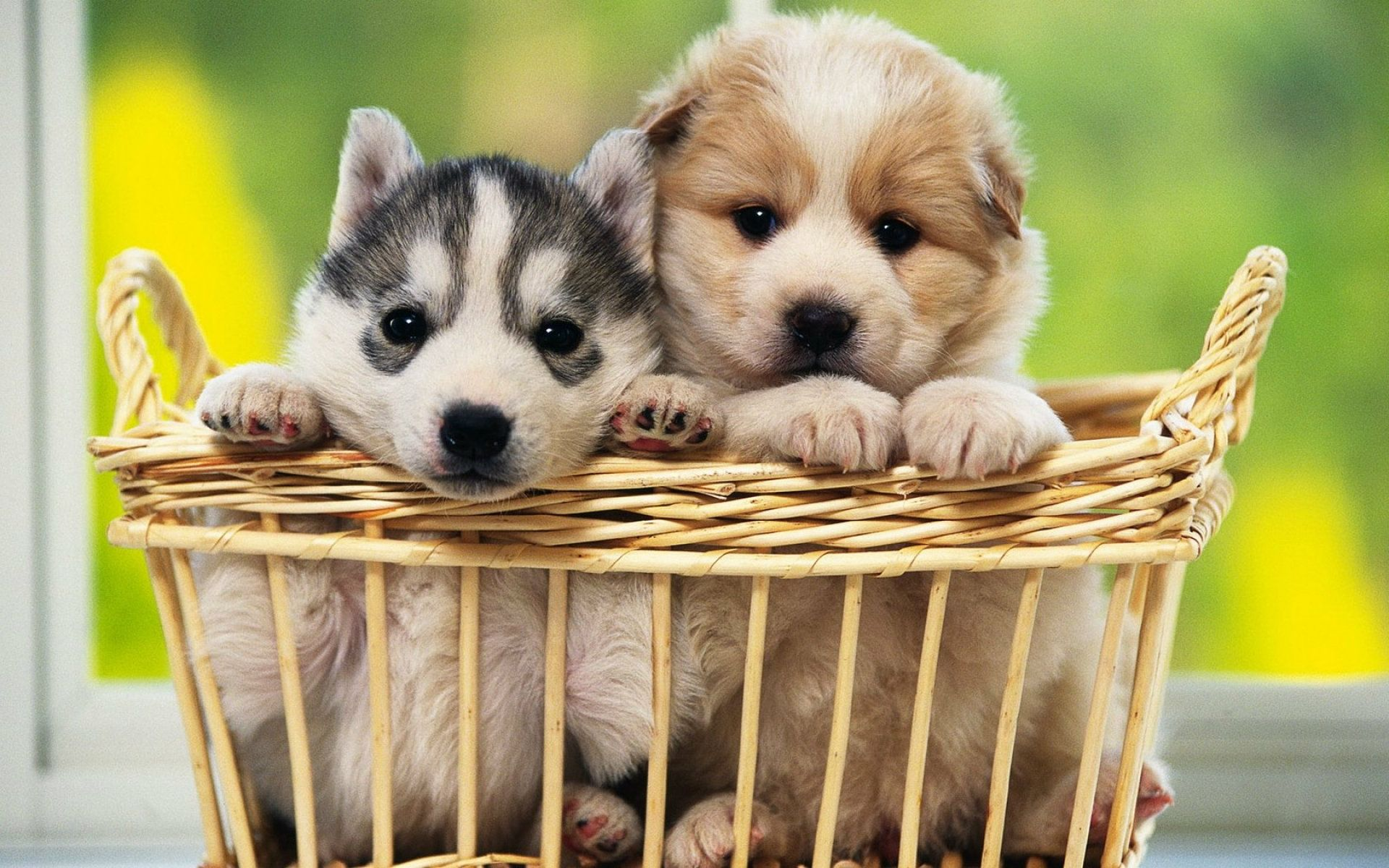 Dog Wallpapers Free Download Wide Pets Animals HD Desktop Images ...