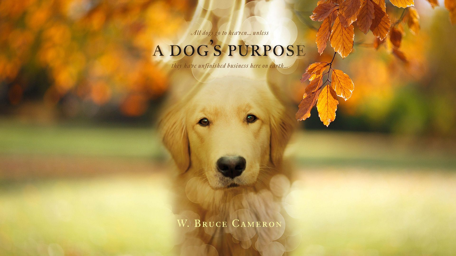 A Dog's Purpose Movie wallpaper HD film 2017 poster image Free HD ...