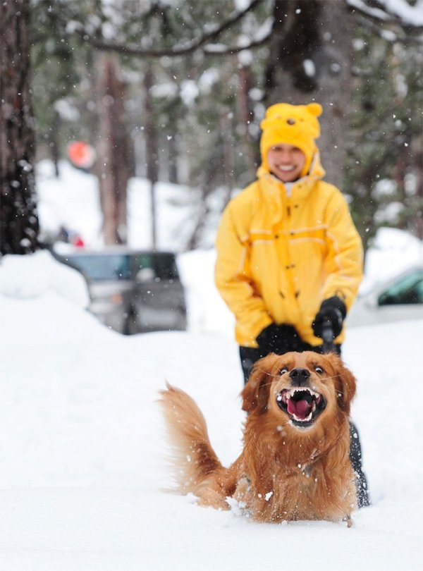 animals seeing snow for the first time 191 Best Photos of the Week! (99 Photos)